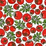 Modèle sans couture avec les feuilles entières de vert de tomate, de Cherry Tomatoes et de tomate Ketchup ou salade Fond mûr frai Image libre de droits