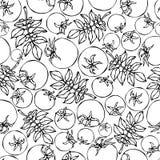 Modèle sans couture avec les feuilles entières de vert de tomate, de Cherry Tomatoes et de tomate Ketchup ou salade Fond mûr frai Photo stock