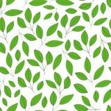 Modèle sans couture avec les feuilles et les branches vertes de ressort sur a Photos libres de droits