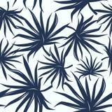 Modèle sans couture avec les feuilles tropicales de palmier Photos libres de droits