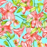 Modèle sans couture avec les fleurs exotiques rouges d'aquarelle, ketmie illustration libre de droits