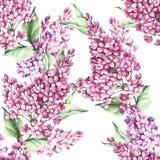 Modèle sans couture avec les fleurs lilas Illustration d'aquarelle Images libres de droits