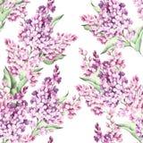 Modèle sans couture avec les fleurs lilas Illustration d'aquarelle Photos libres de droits
