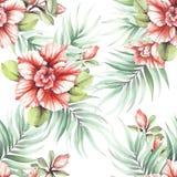 Modèle sans couture avec les fleurs tropicales Illustration d'aquarelle Images libres de droits