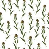 Modèle sans couture avec les herbes brunes et vertes Illustration d'aquarelle illustration de vecteur