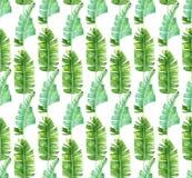 Modèle sans couture avec les palmettes tropicales Image stock