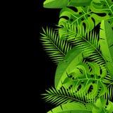 Modèle sans couture avec les palmettes tropicales Plantes tropicales exotiques Illustration de nature de jungle Image libre de droits