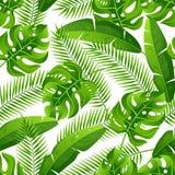 Modèle sans couture avec les palmettes tropicales Plantes tropicales exotiques Illustration de nature de jungle Photographie stock libre de droits