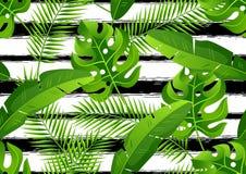 Modèle sans couture avec les palmettes tropicales Plantes tropicales exotiques Illustration de nature de jungle Photos stock