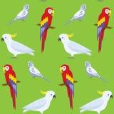 Modèle sans couture avec les perroquets colorés Photos libres de droits