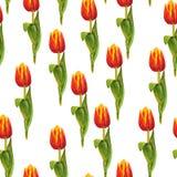 Modèle sans couture avec les tulipes rouges Image libre de droits