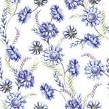 Modèle sans couture avec les wildflowers bleus Illustration d'aquarelle Photographie stock