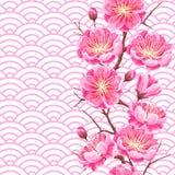 Modèle sans couture avec Sakura ou fleurs de cerisier Ornement japonais floral des fleurs de floraison illustration stock