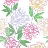 Modèle sans couture blanc avec le peonies_???_???? Photo libre de droits