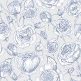 Modèle sans couture botanique avec les roses anglaises de floraison tirées par la main avec la courbe de niveau sur le fond blanc Images stock