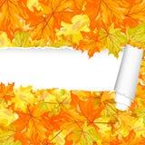 Modèle sans couture d'érable d'automne avec la rayure déchirée Photo stock