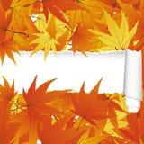 Modèle sans couture d'érable d'automne avec la rayure déchirée Photos stock