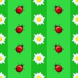 Modèle sans couture d'été avec des marguerites et des coccinelles sur le fond rayé Image stock