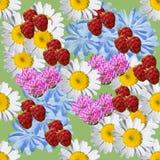 Modèle sans couture d'été des fleurs sauvages et des framboises Photographie stock libre de droits