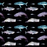 Modèle sans couture d'aquarelle avec des baleines illustration libre de droits