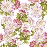 Modèle sans couture d'aquarelle avec des chrysanthèmes Illustration d'aquarelle d'aspiration de main Images stock