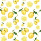 Modèle sans couture d'aquarelle avec des citrons Ornement peint à la main d'agrume sur le fond blanc pour la conception, le tissu Photo stock