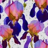 Modèle sans couture d'aquarelle avec des fleurs d'iris dedans Image stock