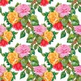 Modèle sans couture d'aquarelle avec des roses Image stock