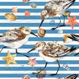 Modèle sans couture d'aquarelle avec l'oiseau de coquillage et de mer illustration stock