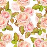 Modèle sans couture d'aquarelle d'été avec les roses roses sur un fond blanc Photographie stock