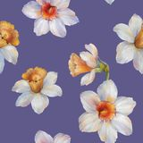 Modèle sans couture d'aquarelle des fleurs de narcisse Illustration d'aquarelle Fleurs pour la conception illustration stock