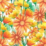 Modèle sans couture d'aquarelle des fleurs sauvages de pré photographie stock