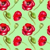 Modèle sans couture d'aquarelle rouge de pavots sur le dessin vert de main de fond illustration stock