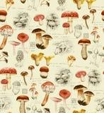 Modèle sans couture d'aquarelle tirée par la main des différents champignons illustration libre de droits