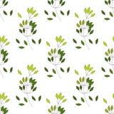 Modèle sans couture d'arbre différent de fougère de paume d'eucalyptus, branches naturelles de feuillage, feuilles vertes, herbes illustration libre de droits