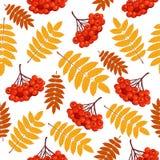 Modèle sans couture d'automne avec la sorbe illustration libre de droits