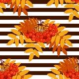 Modèle sans couture d'automne avec la sorbe illustration de vecteur
