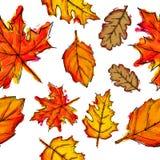 Modèle sans couture d'Autumn Leaves Watercolor Images stock