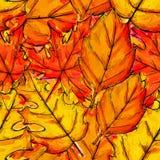Modèle sans couture d'Autumn Leaves Watercolor Overlap Images stock
