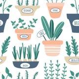 Modèle sans couture d'herbes de cuisine Élevage vert sage, romarin, menthe, thym, arugula, oignon avec des labels Herbes culinair illustration libre de droits