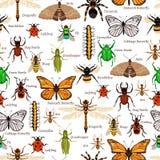 Modèle sans couture d'insectes illustration de vecteur