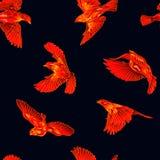 Modèle sans couture d'oiseaux du feu Photo libre de droits