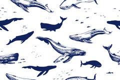 Modèle sans couture de baleines de mer illustration de vecteur