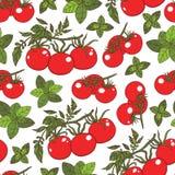 Modèle sans couture de Basil et de tomate illustration stock