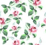 Modèle sans couture de belle roseraie sensible rose Photographie stock libre de droits