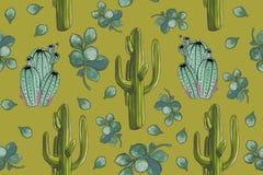 Modèle sans couture de cactus figés de ` de désert d'aquarelle avec le fond de vert de ` de Crassula illustration de vecteur