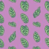 Modèle sans couture de Calathea Makoyana de prière de feuille tropicale d'usine sur le fond violet illustration de vecteur