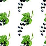 Modèle sans couture de cassis Conception de fond pour le thé, la crème glacée, les cosmétiques naturels, la sucrerie et la boulan illustration de vecteur