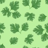 Modèle sans couture de coriandre fraîche sur le fond vert illustration libre de droits