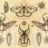 Modèle sans couture de couleur : image d'un papillon, larve, insecte Goliath, insecte à cornes, la géométrie sacrée illustration stock